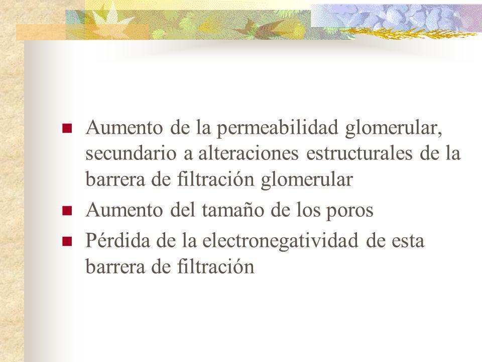 Aumento de la permeabilidad glomerular, secundario a alteraciones estructurales de la barrera de filtración glomerular Aumento del tamaño de los poros