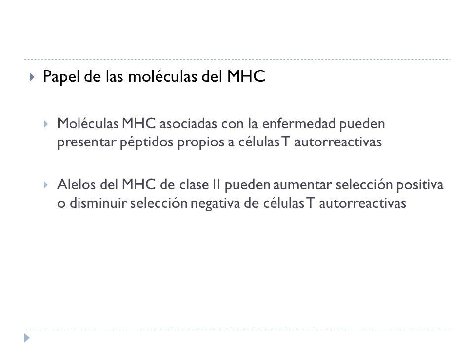 Papel de las moléculas del MHC Moléculas MHC asociadas con la enfermedad pueden presentar péptidos propios a células T autorreactivas Alelos del MHC d