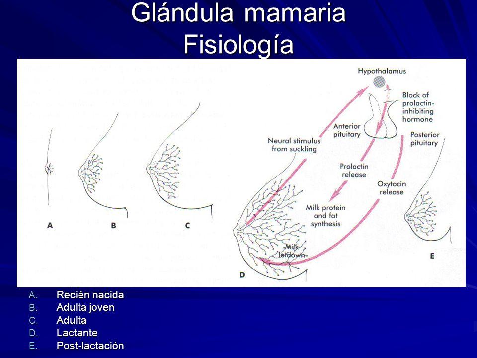 Glándula mamaria Fisiología A. Recién nacida B. Adulta joven C. Adulta D. Lactante E. Post-lactación