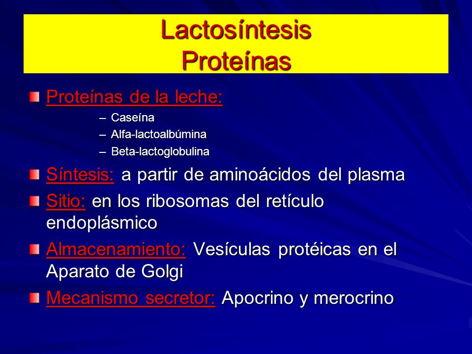 Lactosíntesis Proteínas Proteínas de la leche: –Caseína –Alfa-lactoalbúmina –Beta-lactoglobulina Síntesis: a partir de aminoácidos del plasma Sitio: e