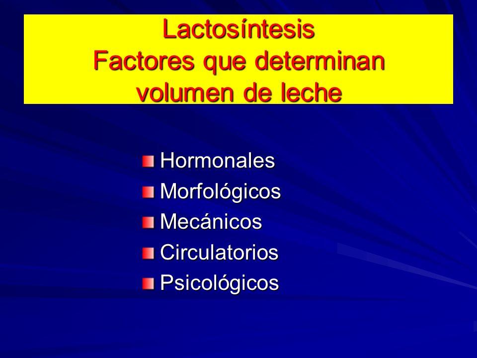 Lactosíntesis Factores que determinan volumen de leche HormonalesMorfológicosMecánicosCirculatoriosPsicológicos