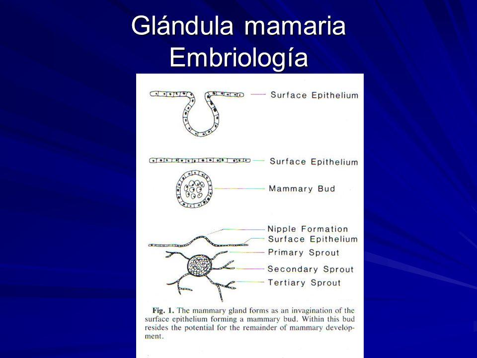 Glándula mamaria Embriología