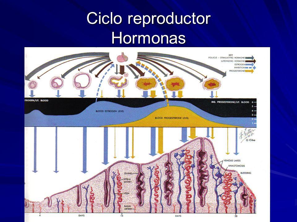 Glándula Mamaria Embarazo y lactancia