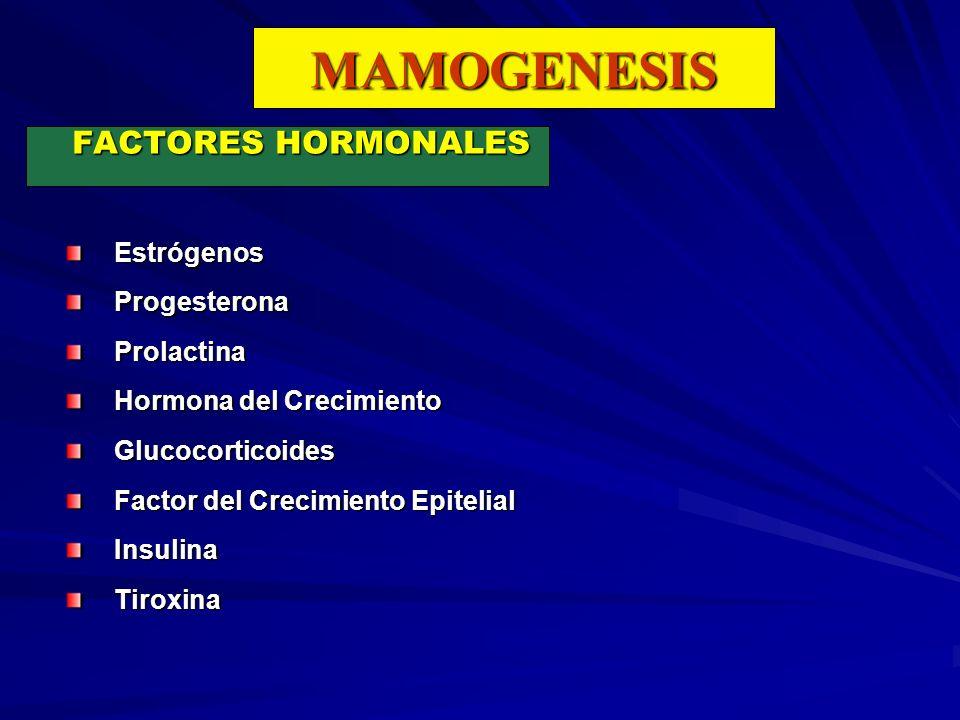 MAMOGENESIS FACTORES HORMONALES EstrógenosProgesteronaProlactina Hormona del Crecimiento Glucocorticoides Factor del Crecimiento Epitelial InsulinaTir