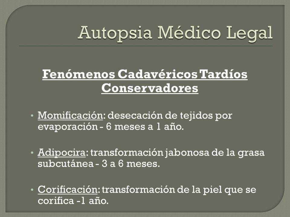 Fenómenos Cadavéricos Tardíos Conservadores Momificación: desecación de tejidos por evaporación - 6 meses a 1 año. Adipocira: transformación jabonosa