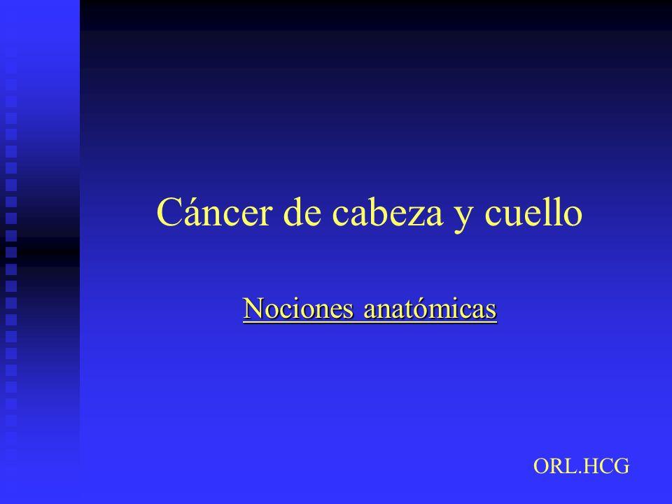 Nociones anatómicas ORL.HCG