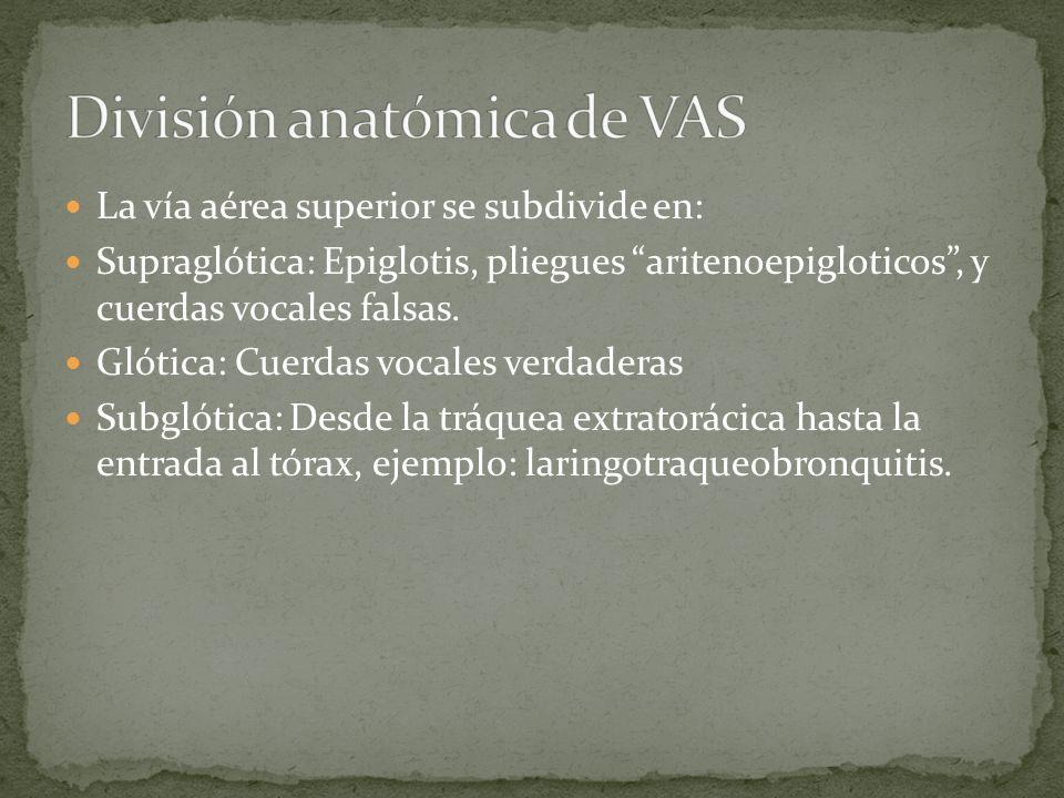 La vía aérea superior se subdivide en: Supraglótica: Epiglotis, pliegues aritenoepigloticos, y cuerdas vocales falsas. Glótica: Cuerdas vocales verdad