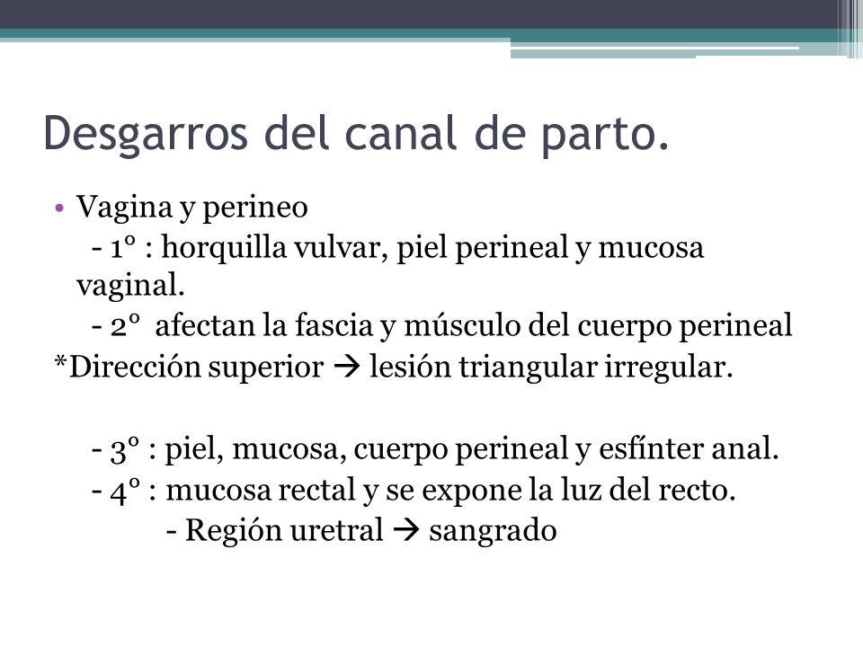 Desgarros del canal de parto. Vagina y perineo - 1° : horquilla vulvar, piel perineal y mucosa vaginal. - 2° afectan la fascia y músculo del cuerpo pe