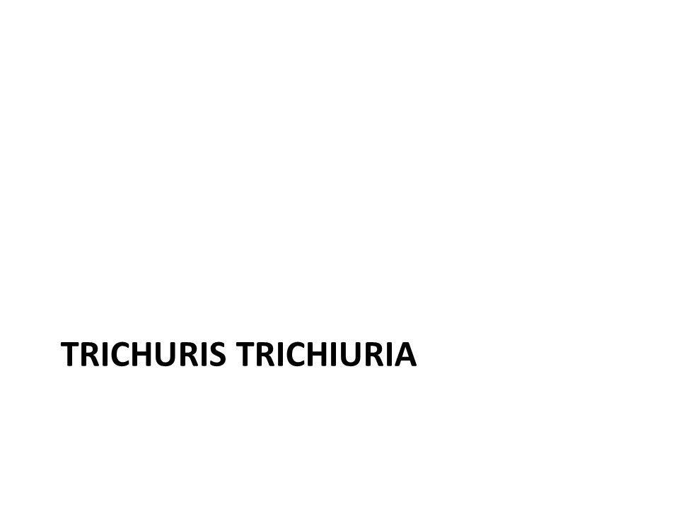 TRICHURIS TRICHIURIA