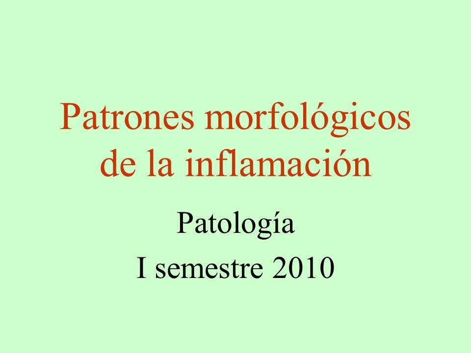 Patrones morfológicos de la inflamación Patología I semestre 2010