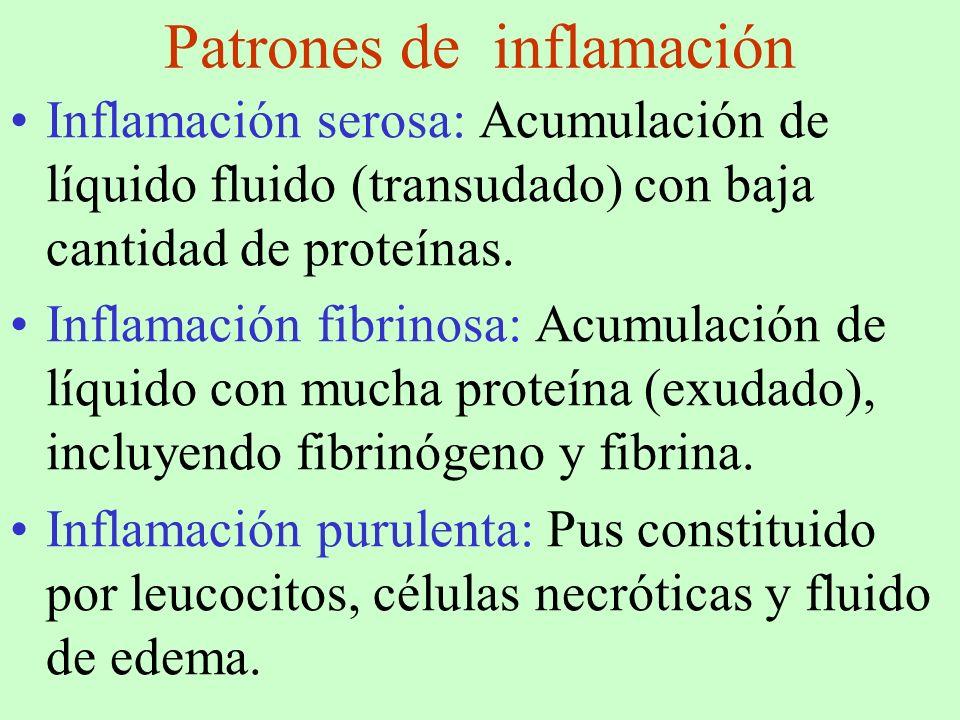 Patrones de inflamación Inflamación serosa: Acumulación de líquido fluido (transudado) con baja cantidad de proteínas. Inflamación fibrinosa: Acumulac