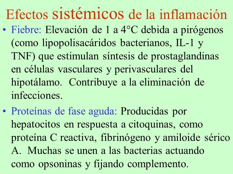 Efectos sistémicos de la inflamación Fiebre: Elevación de 1 a 4°C debida a pirógenos (como lipopolisacáridos bacterianos, IL-1 y TNF) que estimulan sí
