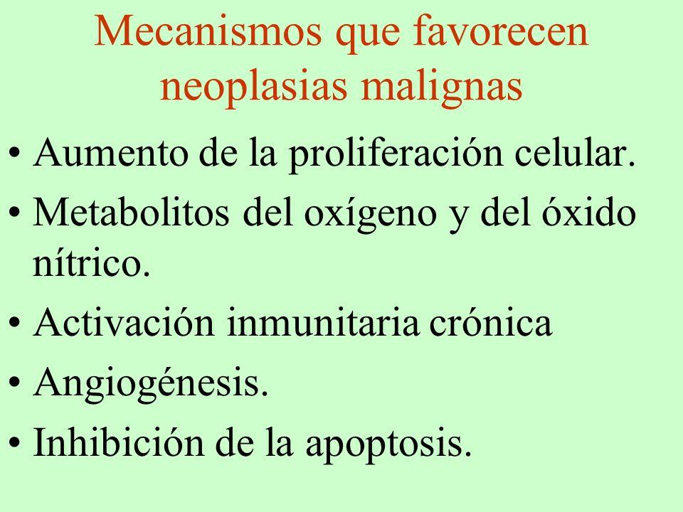Mecanismos que favorecen neoplasias malignas Aumento de la proliferación celular. Metabolitos del oxígeno y del óxido nítrico. Activación inmunitaria
