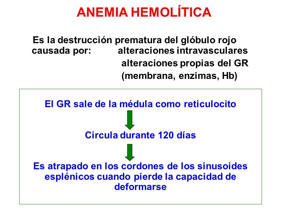 ANEMIA HEMOLÍTICA Es la destrucción prematura del glóbulo rojo causada por: alteraciones intravasculares alteraciones propias del GR (membrana, enzima