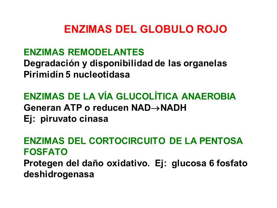 HEMÓLISIS INTRAVASCULAR Liberación de componentes al plasma debido a: trauma, fijación de complemento o tóxicos.