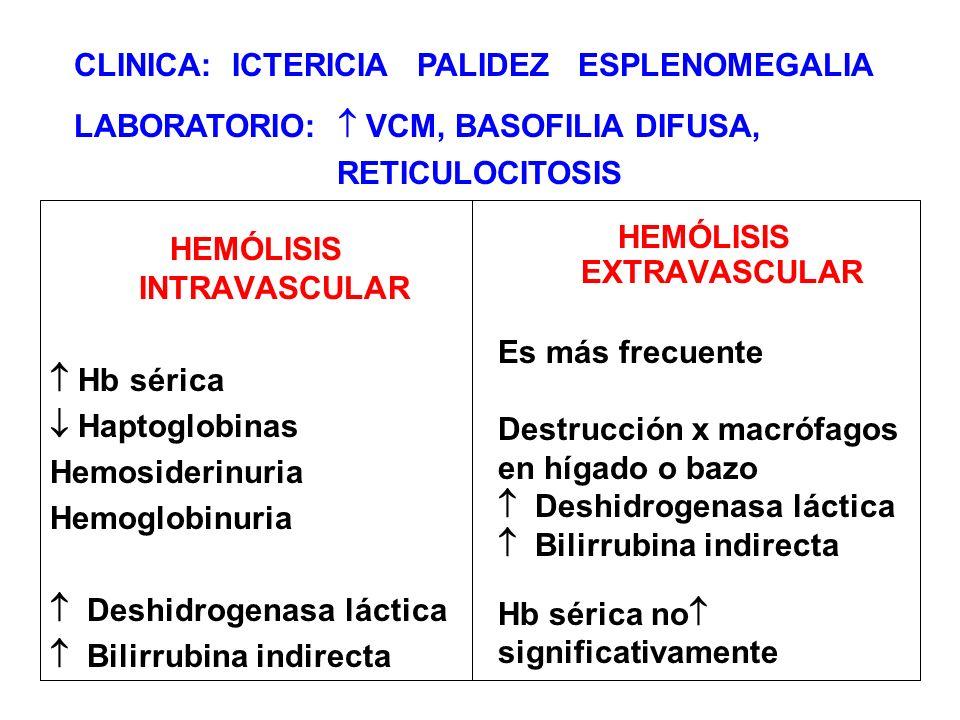 HEMÓLISIS INTRAVASCULAR Hb sérica Haptoglobinas Hemosiderinuria Hemoglobinuria Deshidrogenasa láctica Bilirrubina indirecta HEMÓLISIS EXTRAVASCULAR Es