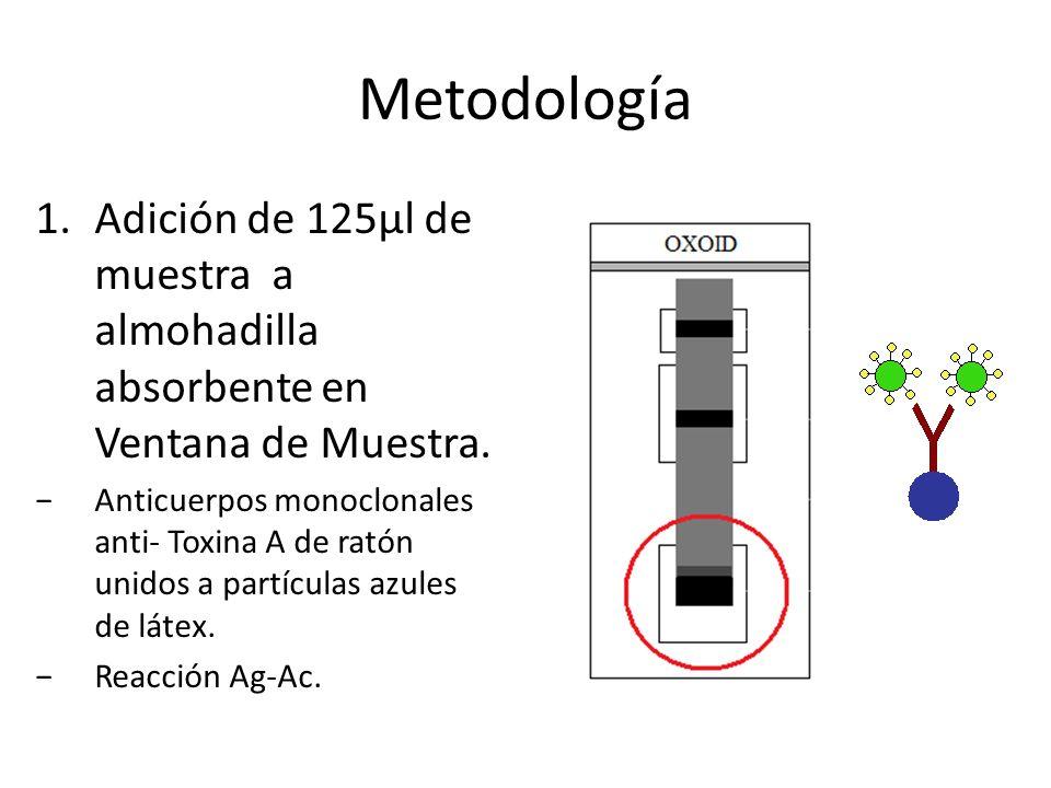 Metodología 1.Adición de 125µl de muestra a almohadilla absorbente en Ventana de Muestra. Anticuerpos monoclonales anti- Toxina A de ratón unidos a pa