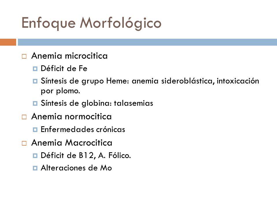Enfoque Morfológico Anemia microcitica Déficit de Fe Síntesis de grupo Heme: anemia sideroblástica, intoxicación por plomo. Síntesis de globina: talas