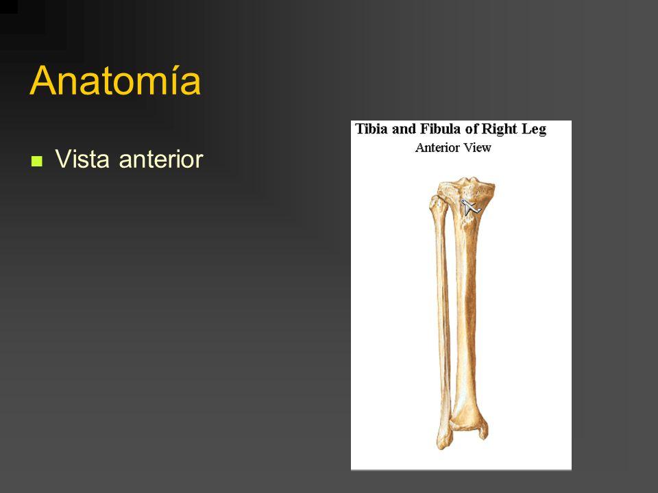 Anatomía Vista anterior