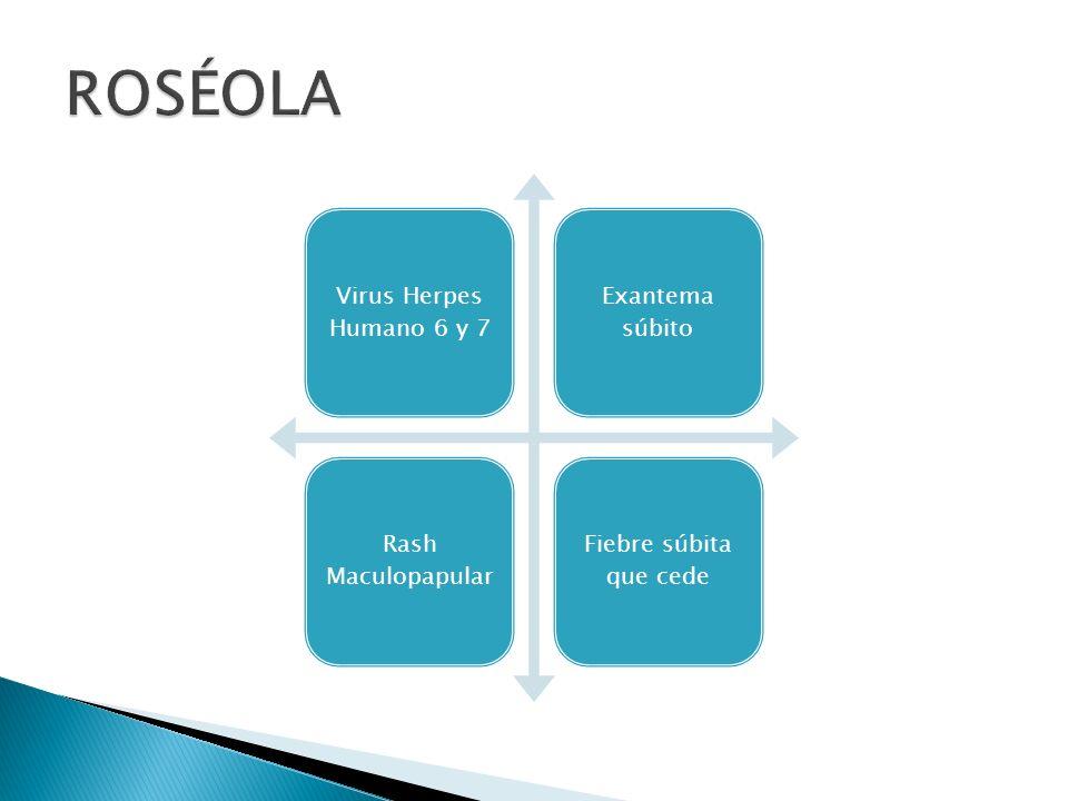 Virus Herpes Humanos 6 y 7 DNA virus Roseolovirus subfamilia Betaherpesvirinae Periodo de incubación 5-15 días