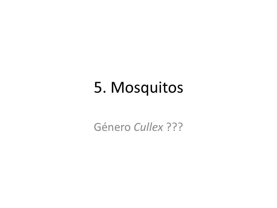 5. Mosquitos Género Cullex ???