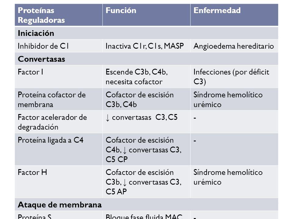 Proteínas Reguladoras FunciónEnfermedad Iniciación Inhibidor de C1Inactiva C1r, C1s, MASPAngioedema hereditario Convertasas Factor IEscende C3b, C4b,
