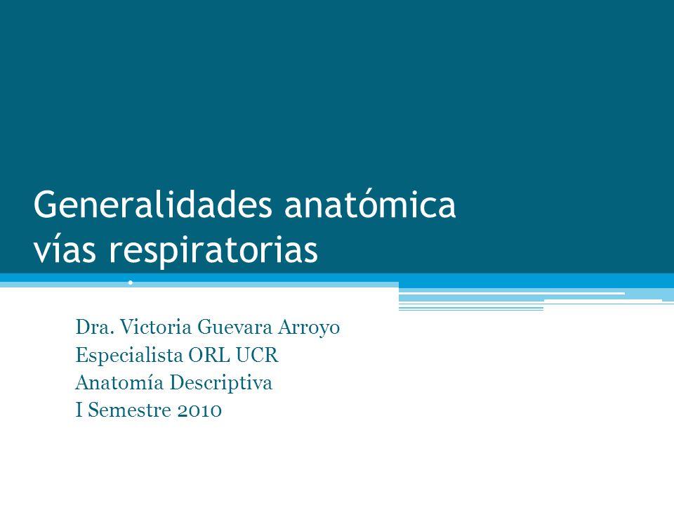 Generalidades anatómica vías respiratorias superiores Dra. Victoria Guevara Arroyo Especialista ORL UCR Anatomía Descriptiva I Semestre 2010