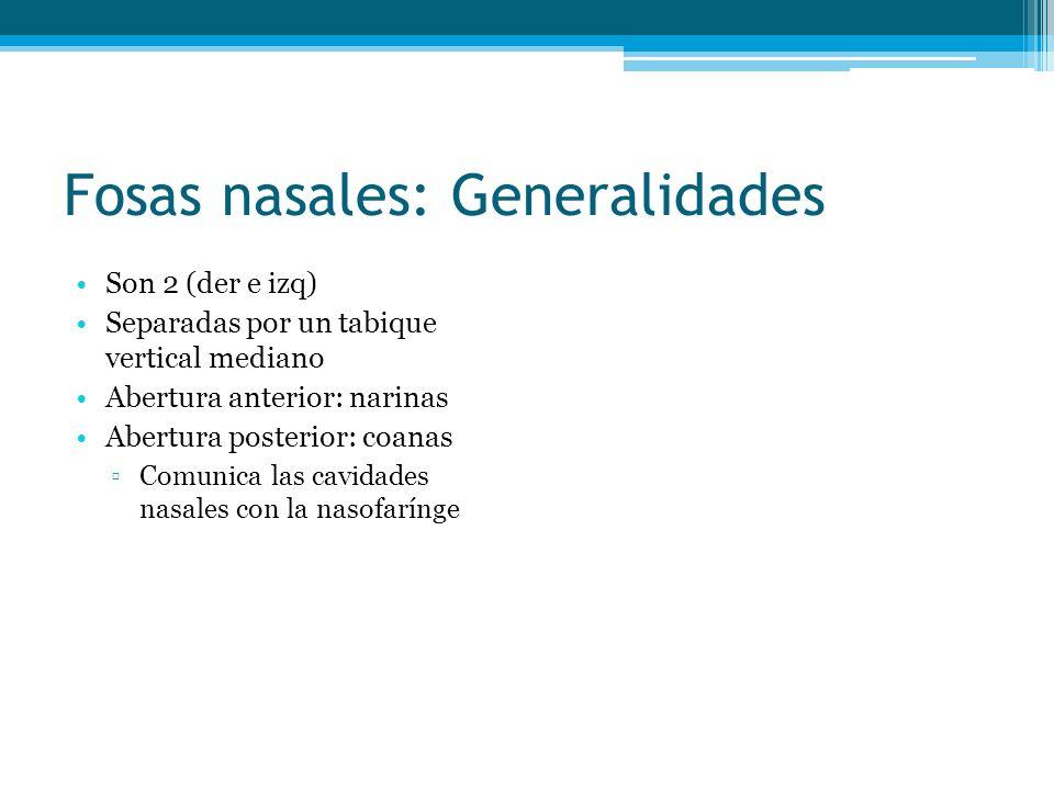 Fosas nasales: Generalidades Son 2 (der e izq) Separadas por un tabique vertical mediano Abertura anterior: narinas Abertura posterior: coanas Comunic