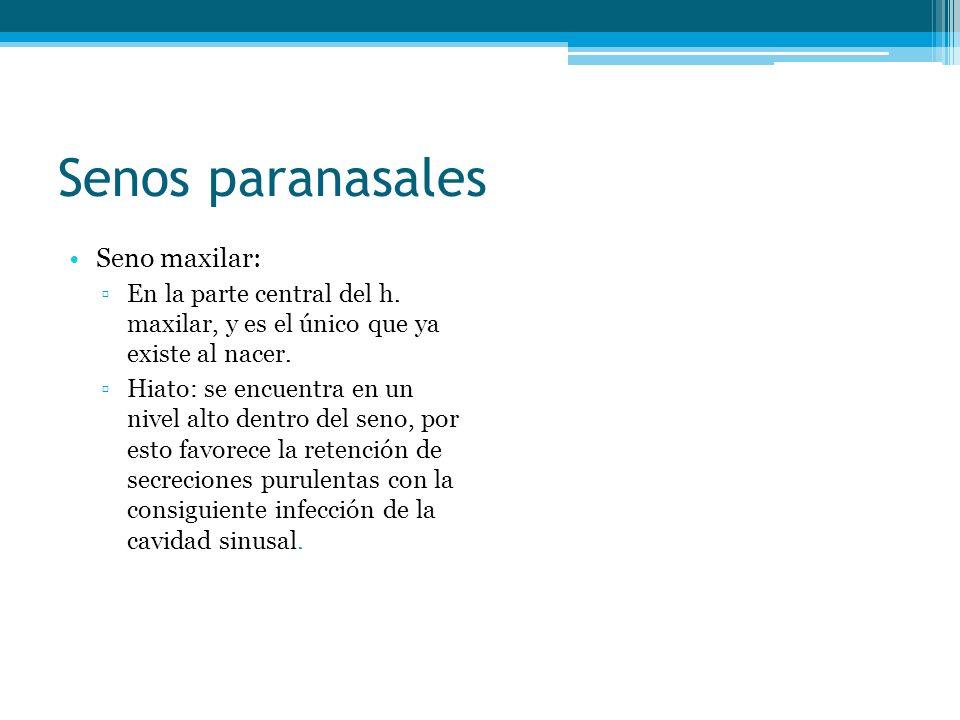 Senos paranasales Seno maxilar: En la parte central del h. maxilar, y es el único que ya existe al nacer. Hiato: se encuentra en un nivel alto dentro