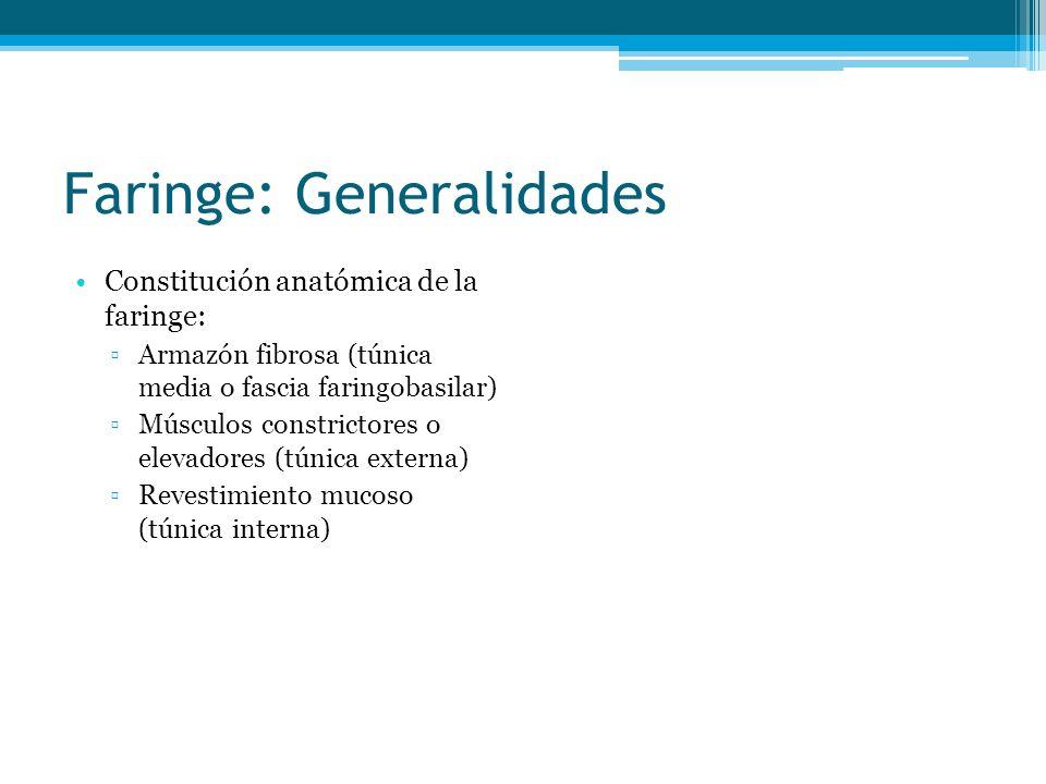 Faringe: Generalidades Constitución anatómica de la faringe: Armazón fibrosa (túnica media o fascia faringobasilar) Músculos constrictores o elevadore