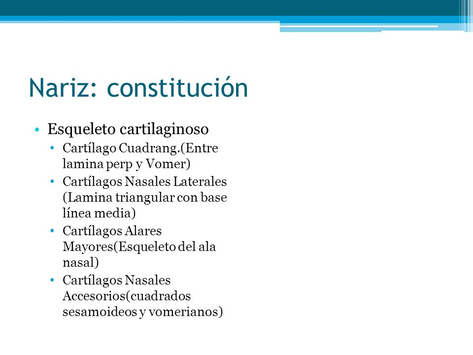 Nariz: constitución Esqueleto cartilaginoso Cartílago Cuadrang.(Entre lamina perp y Vomer) Cartílagos Nasales Laterales (Lamina triangular con base lí