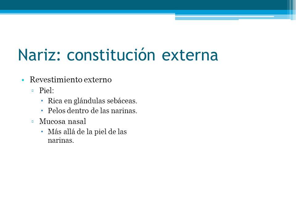 Nariz: constitución externa Revestimiento externo Piel: Rica en glándulas sebáceas. Pelos dentro de las narinas. Mucosa nasal Más allá de la piel de l