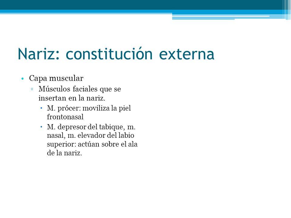 Nariz: constitución externa Capa muscular Músculos faciales que se insertan en la nariz. M. prócer: moviliza la piel frontonasal M. depresor del tabiq