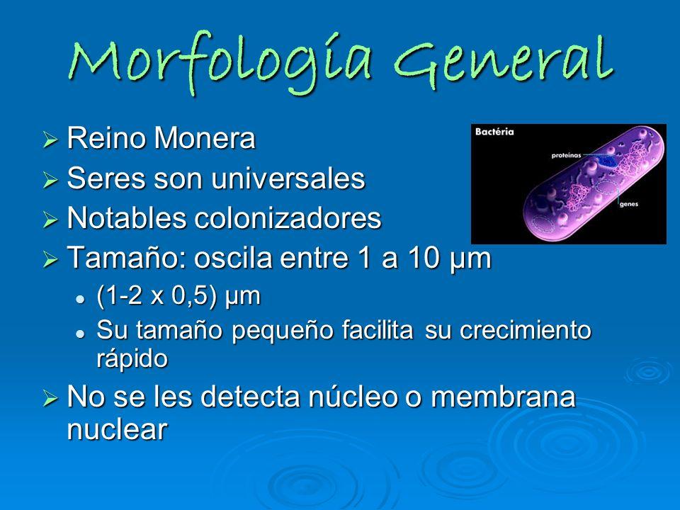 Morfología General Reino Monera Reino Monera Seres son universales Seres son universales Notables colonizadores Notables colonizadores Tamaño: oscila