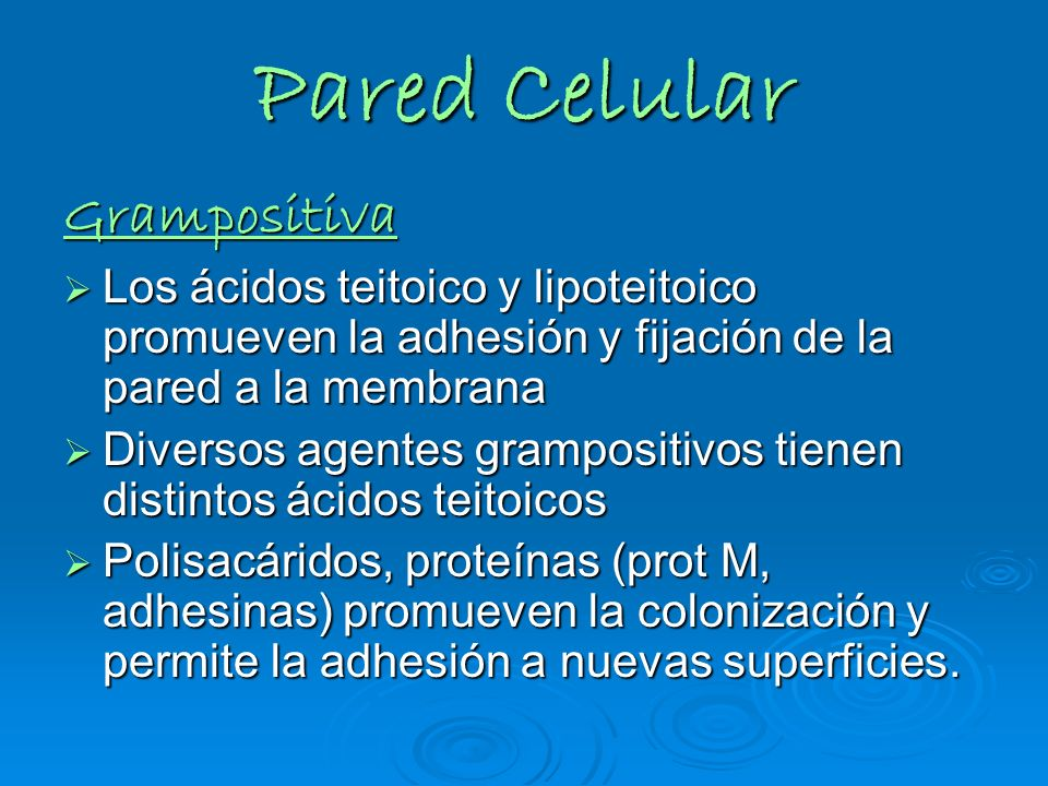 Pared Celular Grampositiva Los ácidos teitoico y lipoteitoico promueven la adhesión y fijación de la pared a la membrana Los ácidos teitoico y lipotei