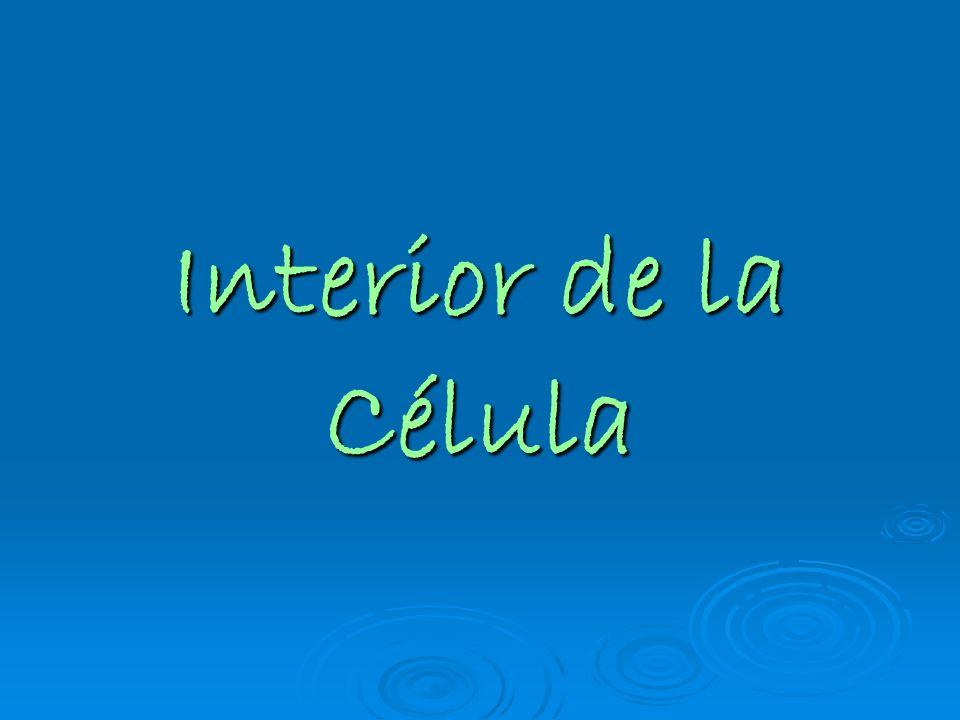 Interior de la Célula