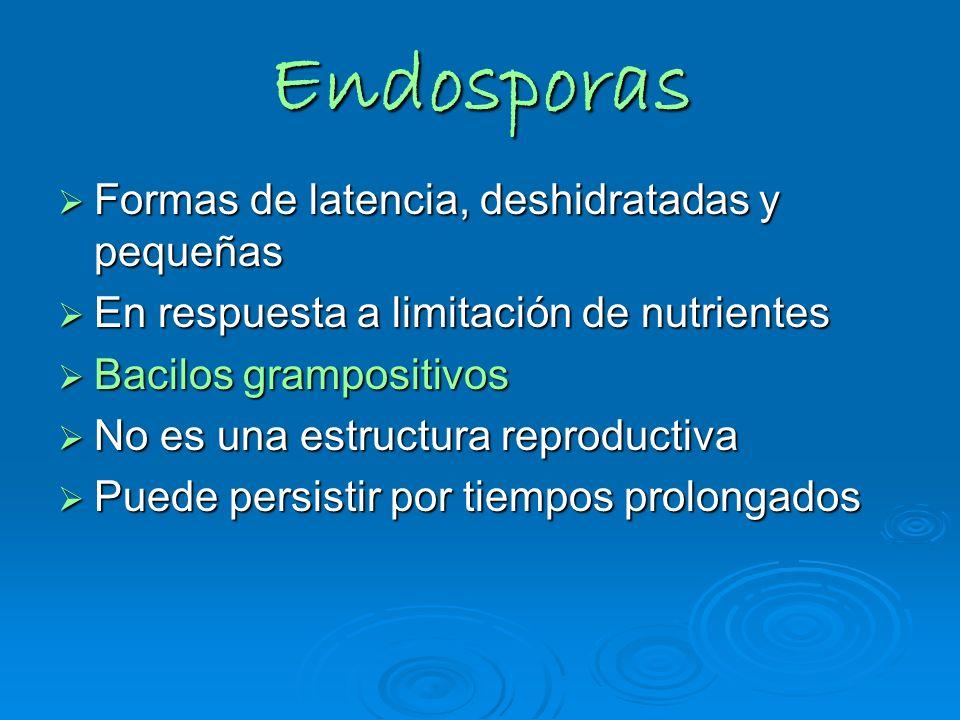 Endosporas Formas de latencia, deshidratadas y pequeñas Formas de latencia, deshidratadas y pequeñas En respuesta a limitación de nutrientes En respue