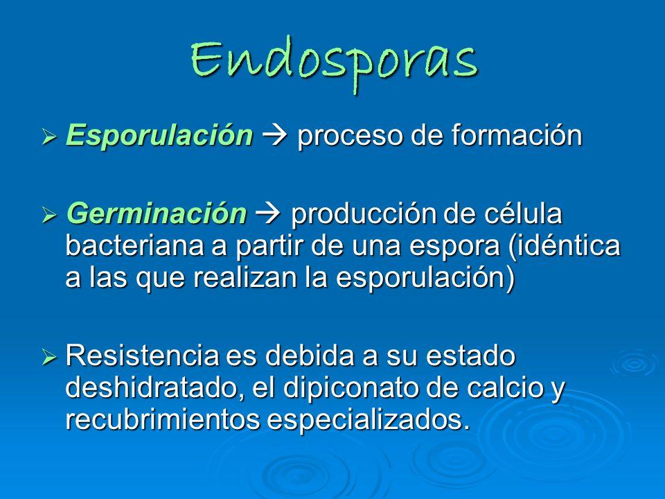 Endosporas Esporulación proceso de formación Esporulación proceso de formación Germinación producción de célula bacteriana a partir de una espora (idé