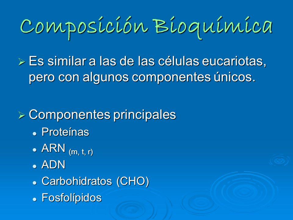 Composición Bioquímica Es similar a las de las células eucariotas, pero con algunos componentes únicos. Es similar a las de las células eucariotas, pe