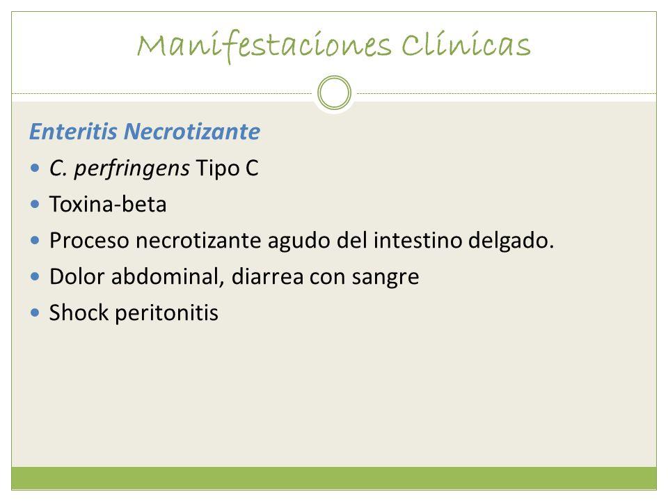 Manifestaciones Clínicas Enteritis Necrotizante C. perfringens Tipo C Toxina-beta Proceso necrotizante agudo del intestino delgado. Dolor abdominal, d