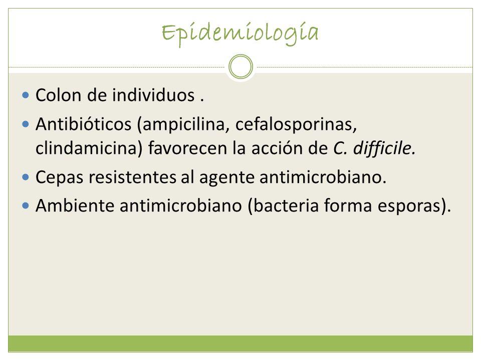 Epidemiología Colon de individuos. Antibióticos (ampicilina, cefalosporinas, clindamicina) favorecen la acción de C. difficile. Cepas resistentes al a