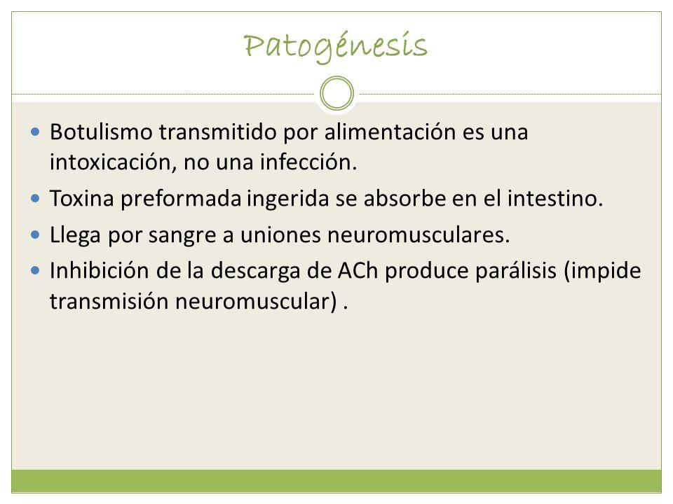 Patogénesis Botulismo transmitido por alimentación es una intoxicación, no una infección. Toxina preformada ingerida se absorbe en el intestino. Llega