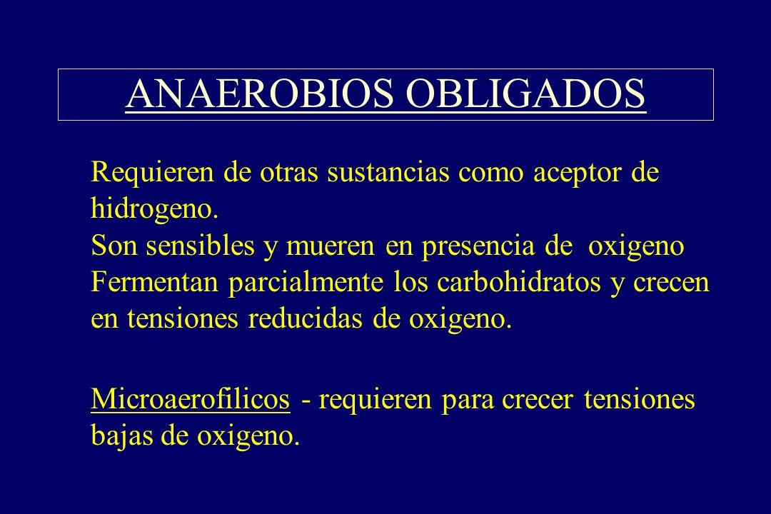 ANAEROBIOS OBLIGADOS §Requieren de otras sustancias como aceptor de hidrogeno. Son sensibles y mueren en presencia de oxigeno Fermentan parcialmente l