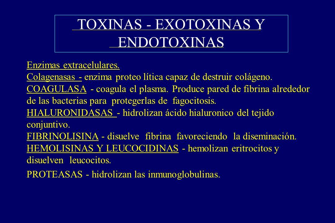 TOXINAS - EXOTOXINAS Y ENDOTOXINAS §Enzimas extracelulares. Colagenasas - enzima proteo lítica capaz de destruir colágeno. COAGULASA - coagula el plas