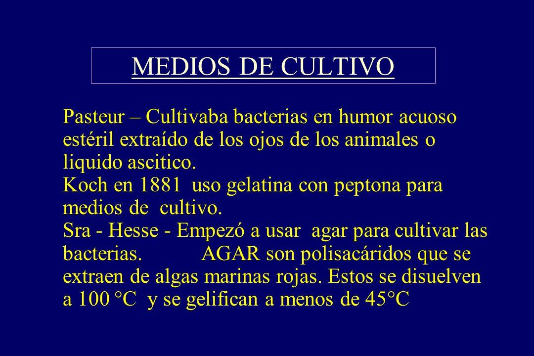 MEDIOS DE CULTIVO §Pasteur – Cultivaba bacterias en humor acuoso estéril extraído de los ojos de los animales o liquido ascitico. Koch en 1881 uso gel