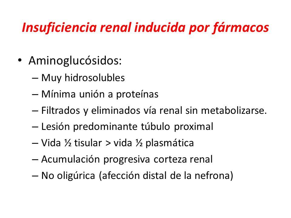 Insuficiencia renal inducida por fármacos Aminoglucósidos: – Muy hidrosolubles – Mínima unión a proteínas – Filtrados y eliminados vía renal sin metab