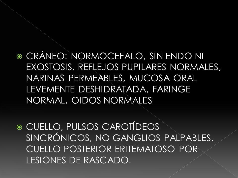 TORAX: CAMPOS PULMONARES CON ADECUADA ENTRADA Y SALIDA DE AIRE, RUIDOS CARDIÁCOS: RITMICOS, INTENSOS, NO SOPLOS.