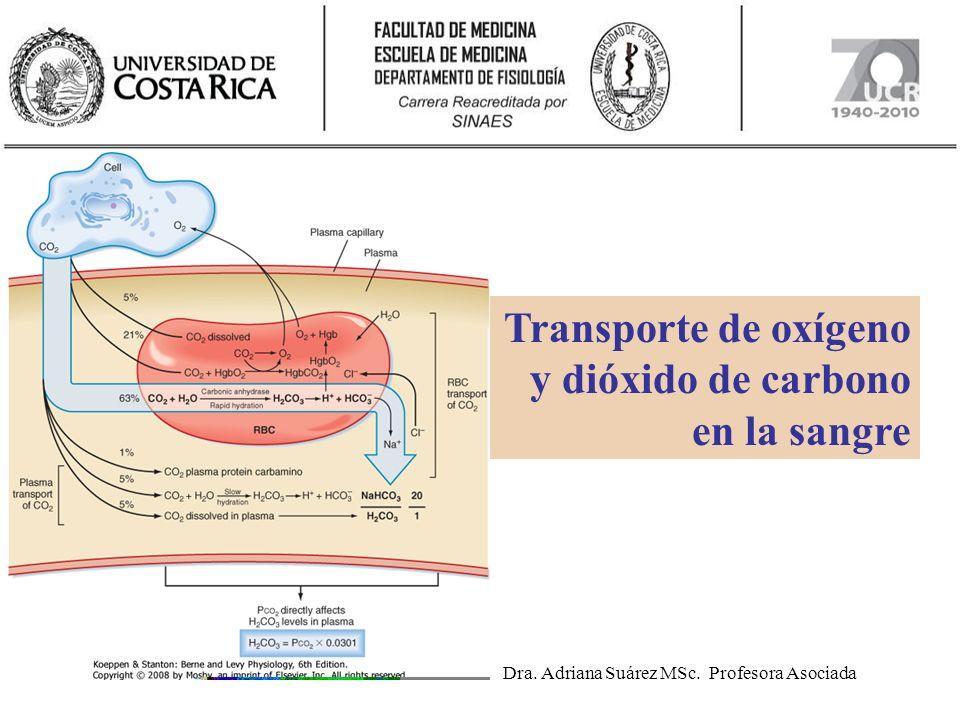 Guía de estudio Objetivo terminal: Conocer los principales mecanismos de transporte del oxígeno y del dióxido de carbono por la sangre: disueltos y ligados a la hemoglobina.