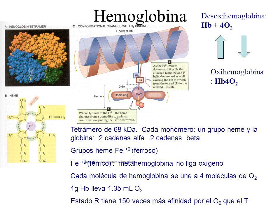 El transporte de oxígeno en solución y con la hemoglobina se describe con 5 índices: 1.Capacidad de transporte de oxígeno: cantidad máxima de oxígeno que puede ser transportada por la hemoglobina.