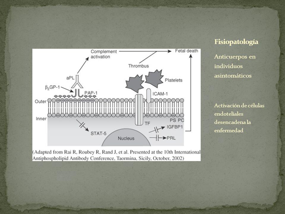 Anticuerpos en individuos asintomáticos Activación de células endoteliales desencadena la enfermedad